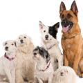 dog group 3