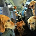 perros en avion