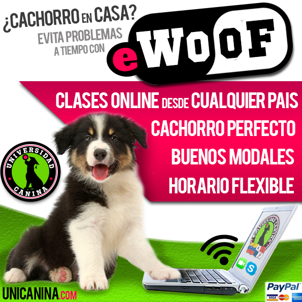 eWoof Universidad Canina