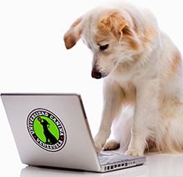 computer-dog sm