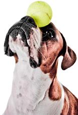 dog ball balance