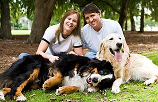 dog family 2