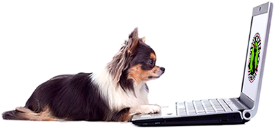 dog laptop 2