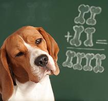 dog math