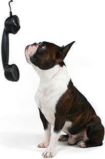 dog phone