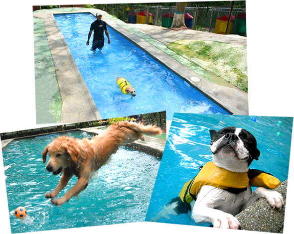 pet-suites-caracas-piscina